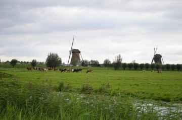 Krajobraz Holandii